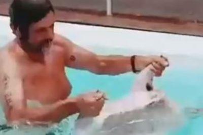 Filtran video de empresario recogiendo cordero lanzado a piscina desde helicóptero