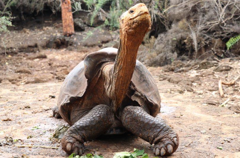 Diego, la tortuga semental que salvó a su especie de la extinción
