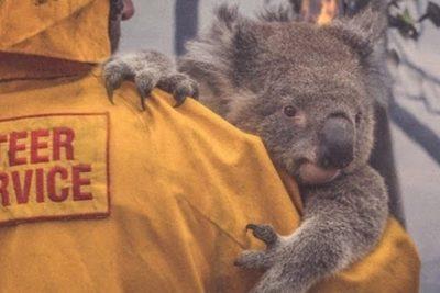 Experto dice que 500 millones de animales fueron afectados por incendios en Australia