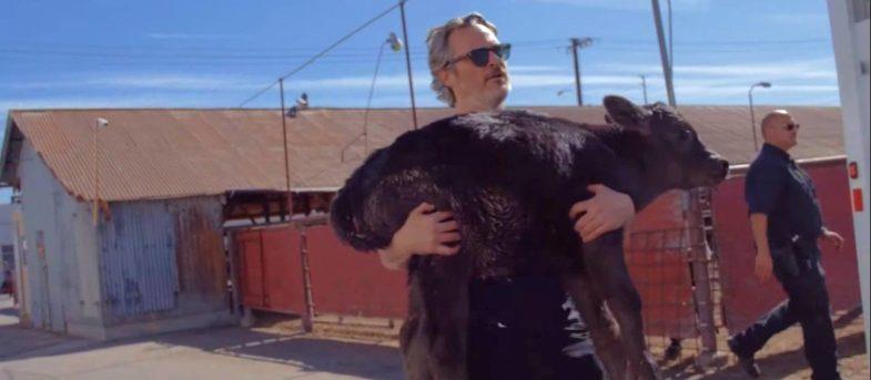 Al día siguiente de ganar un Oscar: Joaquin Phoenix rescató a una vaca y a su cría de morir en un matadero