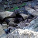 Brutal crimen en Argentina: mujer fue violada y su hijo de 4 años fue lanzado por un acantilado
