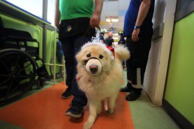 Vecinos de San Borja se querellan por muerte de mascotas expuestas a gas lacrimógeno