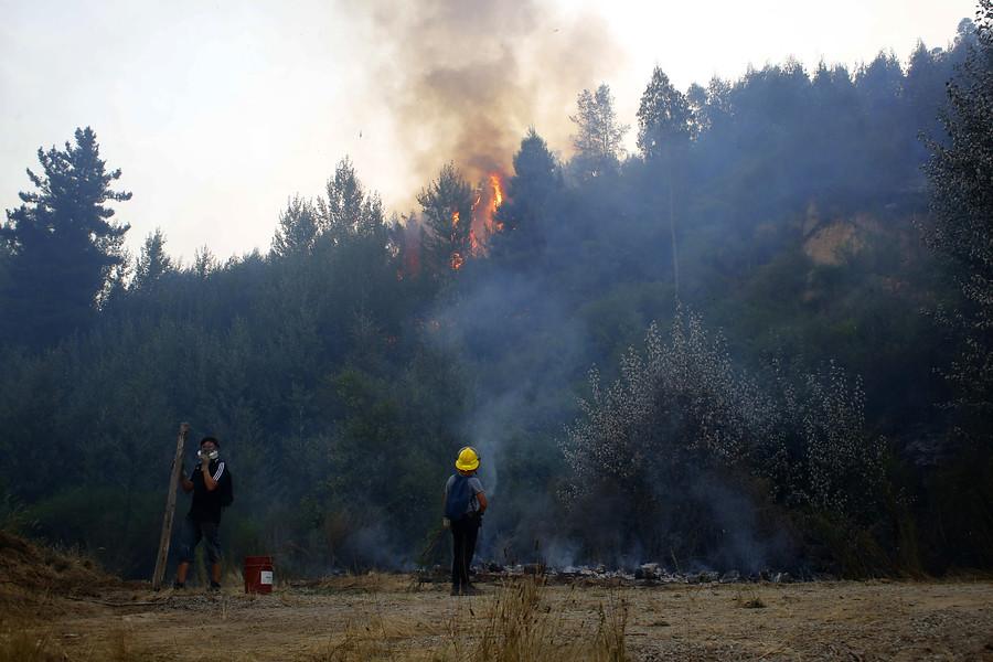 Onemi solicita evacuación en Galvarino por incendio forestal
