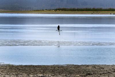 DGA: 12 ríos de Chile tienen sus caudales bajo el mínimo histórico