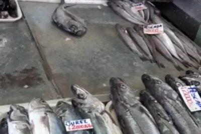 """""""El crimen perfecto"""": gatito se roba pescado en caleta de San Antonio"""