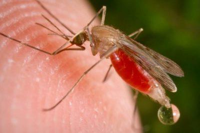 Reportan casos importados de malaria en la región de Tarapacá