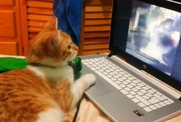 Día internacional del gato: los videos que son tendencia para tus mascotas en YouTube
