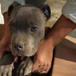 """""""Que no me olvide"""": niño da a su mascota en adopción para salvarlo de los maltratos de su padre"""