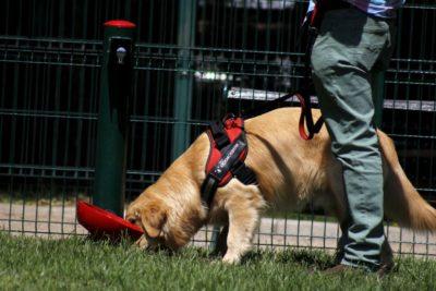 Cuarentena: alcalde de Santiago postula permiso permanente para pasear a mascotas