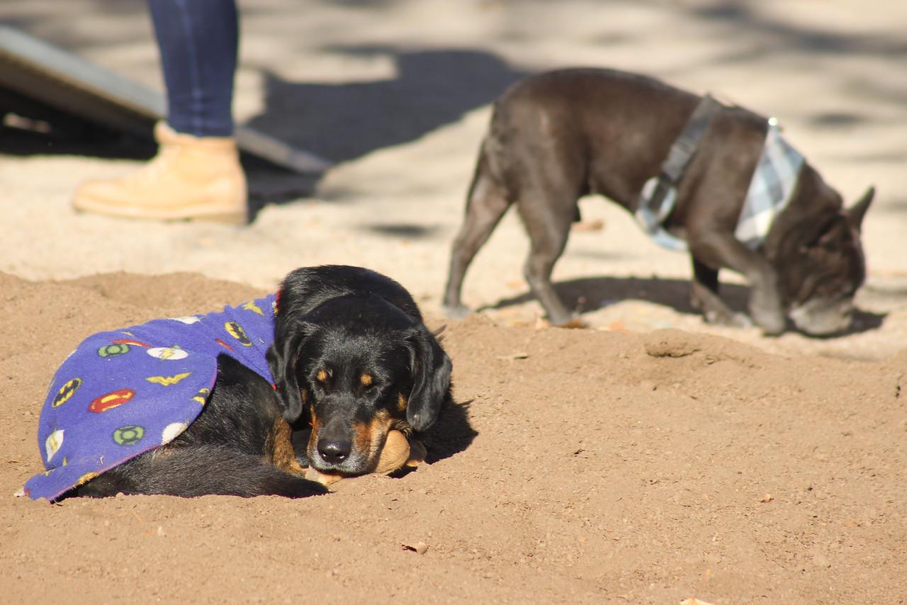 La Cisterna: tribunal condenó a sujeto que estranguló a su perro frente a sus vecinos
