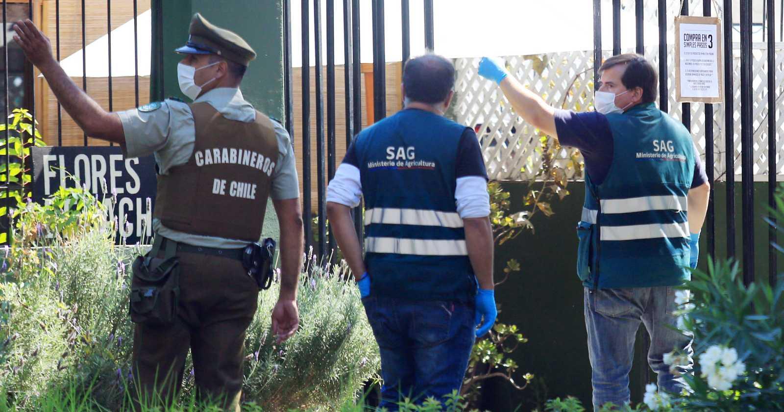 SAG Metropolitano descarta presencia de puma en La Reina