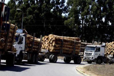 Desde Italia a Estados Unidos: declaran a la industria de la madera, papel y celulosa como esencial en la lucha contra el coronavirus
