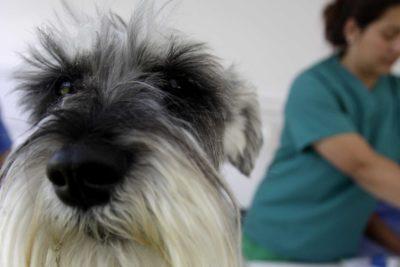 Análisis de test y entrega de ventiladores mecánicos usados en animales: las propuestas de los veterinarios al Gobierno