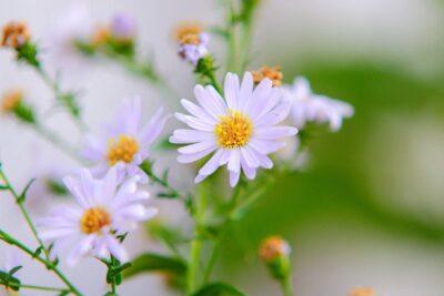 10 plantas y hierbas medicinales para combatir el estrés y la depresión