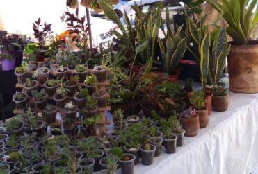 Planta Infinita: el emprendimiento que une la naturaleza, la belleza y la salud
