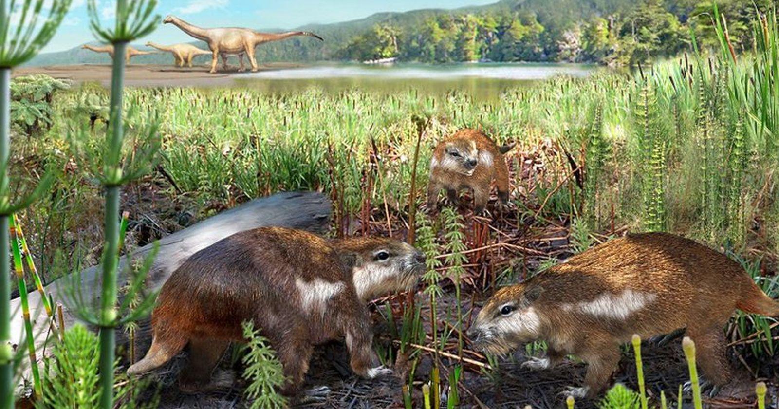 Descubren al primer mamífero chileno que convivió con los dinosaurios