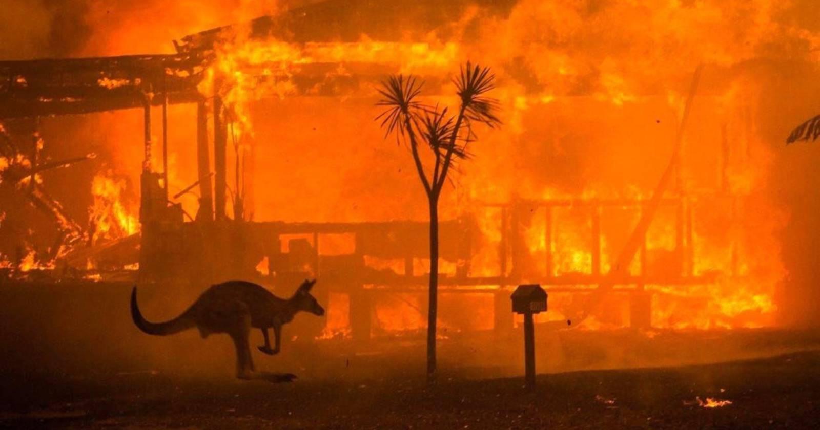"""""""Incendios forestales de Australia mataron a tres mil millones de animales"""""""