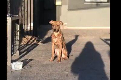 Pandemia: el perro que se transformó en la mascota de la Municipalidad de Providencia