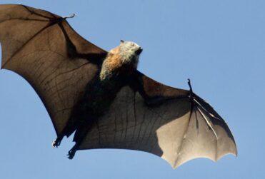 ONU advierte aumento de enfermedades trasmitidas de animales a humanos