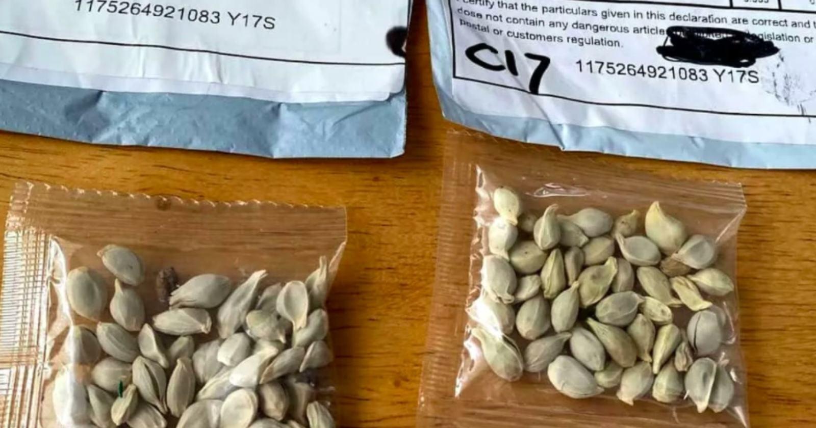 Por qué las envían y qué debo hacer si recibo un paquete con misteriosas semillas chinas