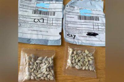 Resuelven misterio de las semillas chinas que llegaron a Estados Unidos, Canadá y Reino Unido