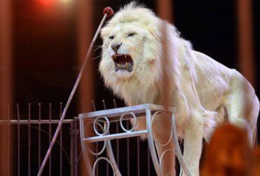 Francia prohibirá los animales salvajes en los circos
