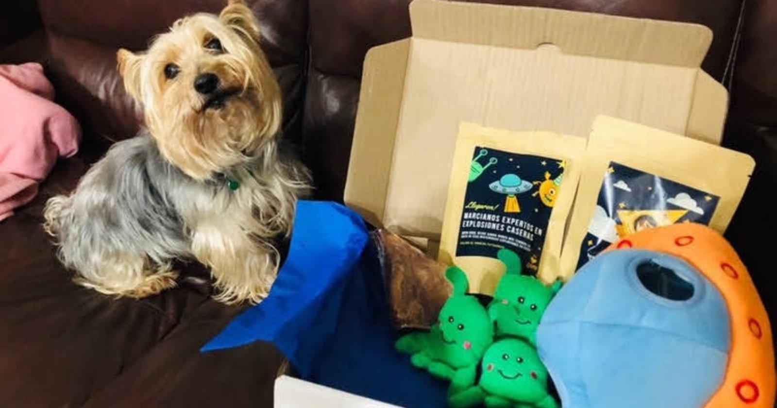 Caja Guau: el kit con snacks saludables y juguetes para mascotas