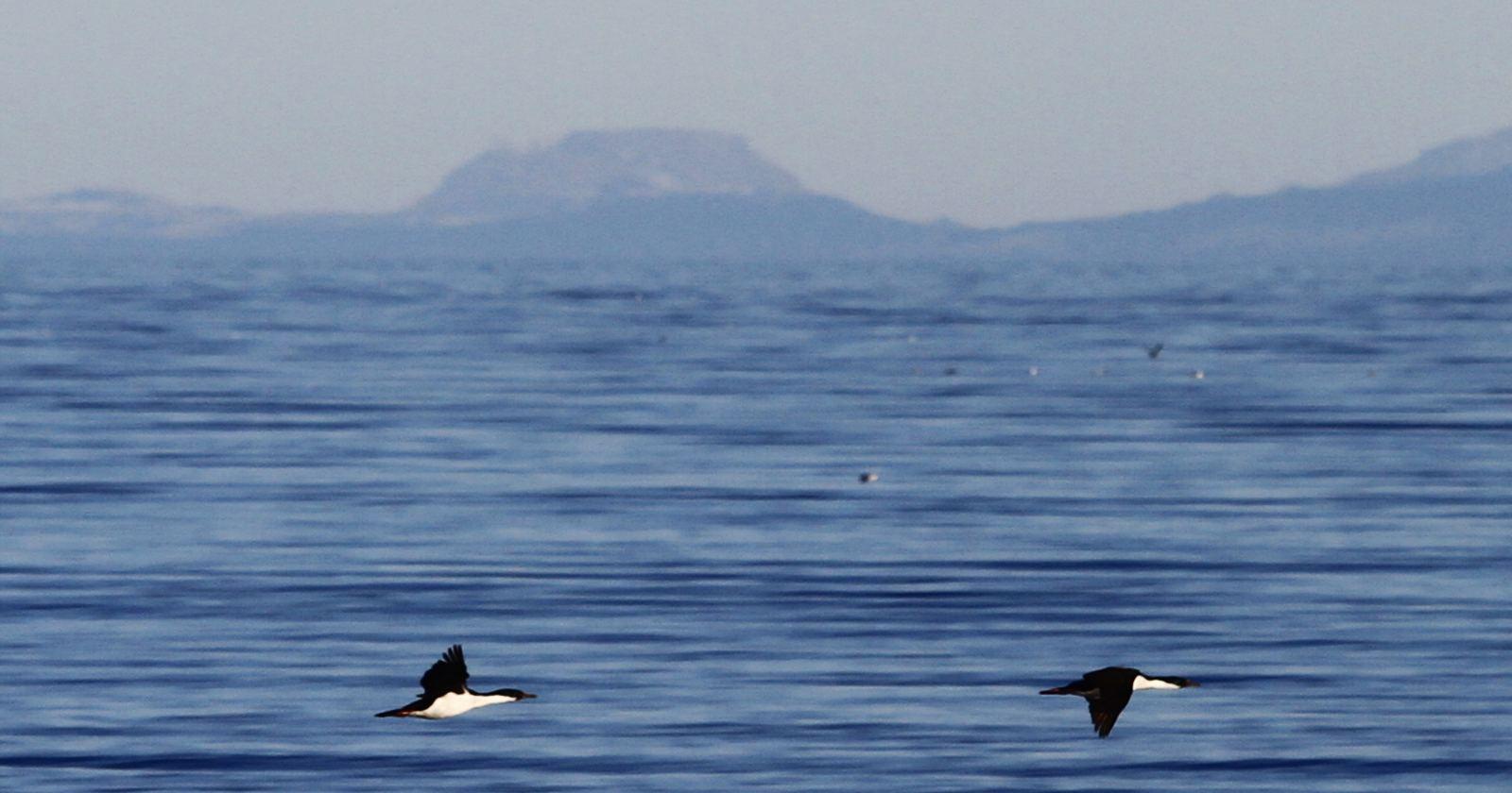 """""""A 500 años del descubrimiento del Estrecho de Magallanes, el hito que marcó el inicio de la globalización"""""""