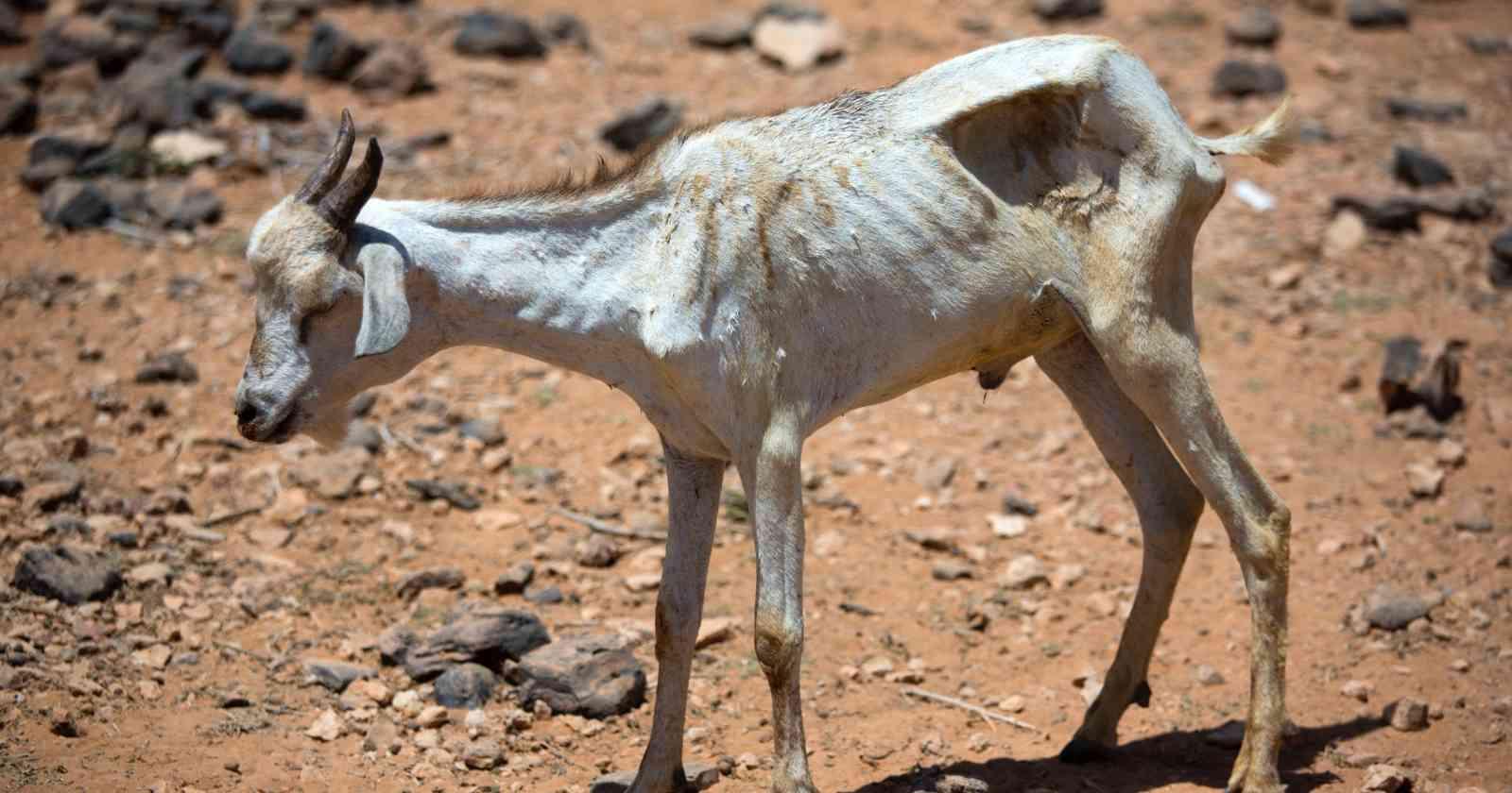 La falsa imagen de la sequía en Petorca