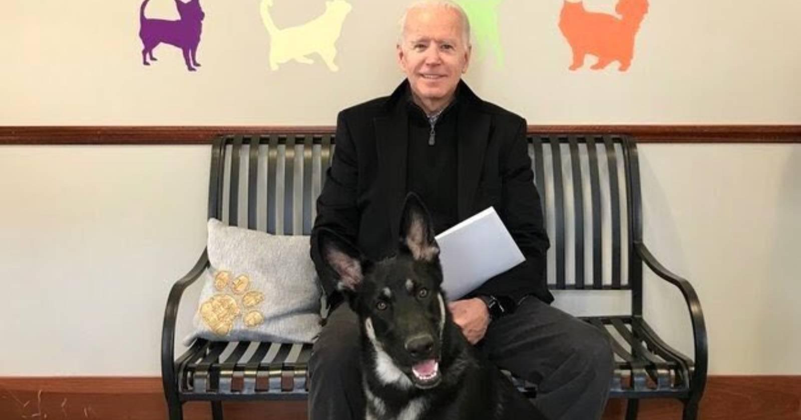 """""""Major"""" será el primer perro adoptado que vivirá en la Casa Blanca"""