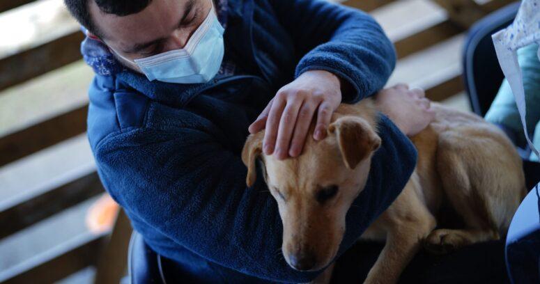 """""""Sernac anuncia compensación de hasta $1.750.000 por perros enfermos con alimentos en mal estado"""""""
