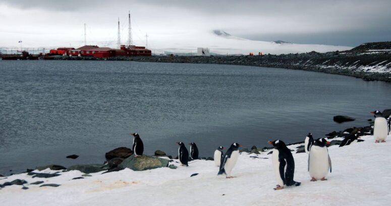 """""""Autoridades de Magallanes investigan cómo llegó el coronavirus a la Antártica"""""""