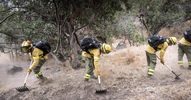 Brigada Central de CMPC realizó cortafuegos en el Cerro del Medio en Lo Barnechea para evitar incendios rurales