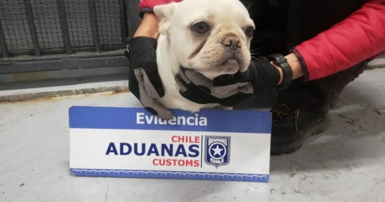 """""""Avaluados en $15 millones: Aduanas rescata a 25 cachorros ingresados de contrabando"""""""
