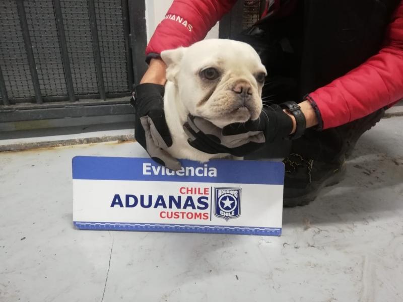 Los animales fueron derivados a centros de cuidado animal. Foto: Aduanas