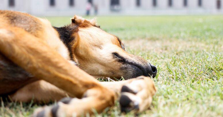 Mascotas y peligros veraniegos