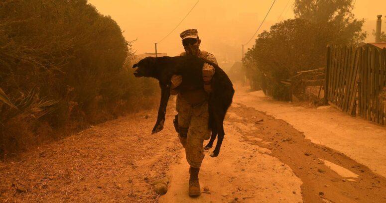 """Conaf acusa """"intencionalidad extrema"""" en incendio forestal en Quilpué"""