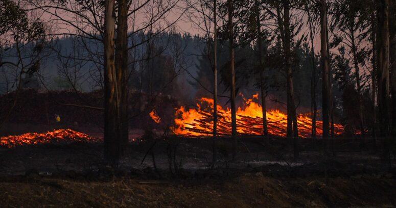 3 mil incendios forestales han afectado al país durante esta temporada