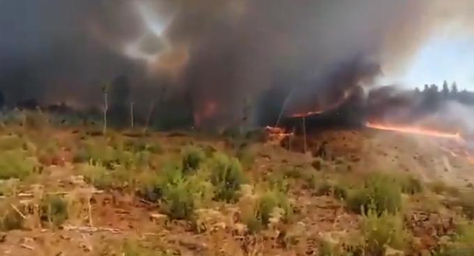 Biobío: Onemi ordena evacuación tras incendio forestal en Nacimiento