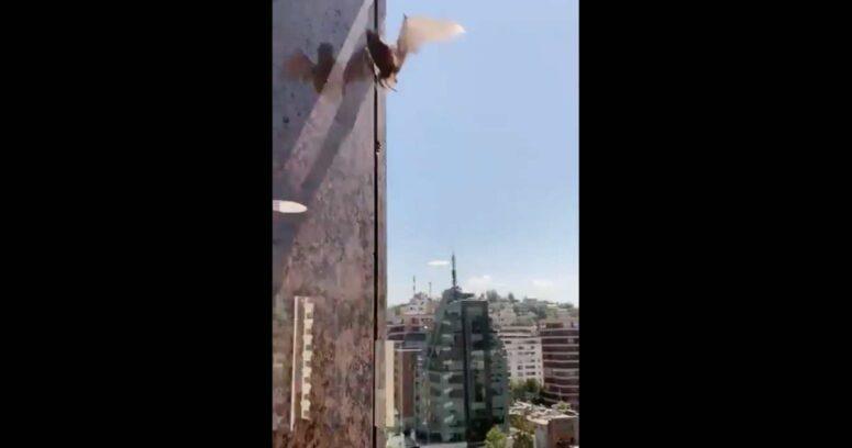 VIDEO – Decenas de murciélagos sorprenden a vecinos en Las Condes