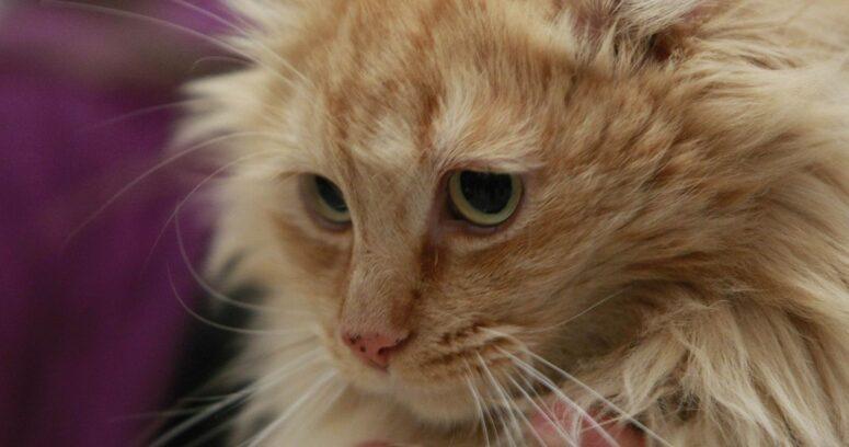 SAG visitará planta de Master Cat tras denuncias por alimento de gatos