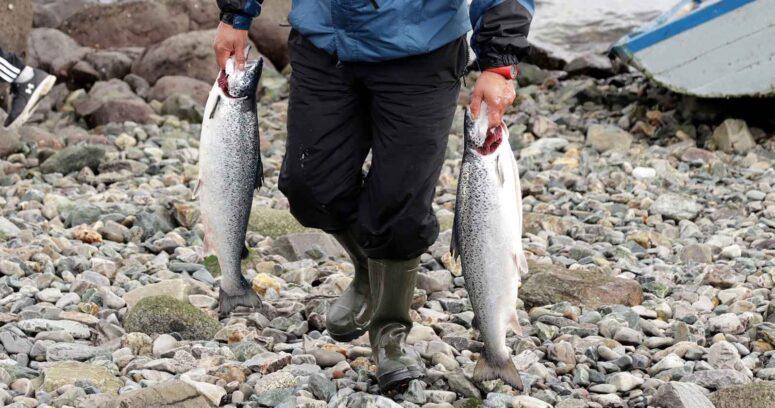 Desconocidos roban parte de cargamento de salmón contaminado en Talcahuano