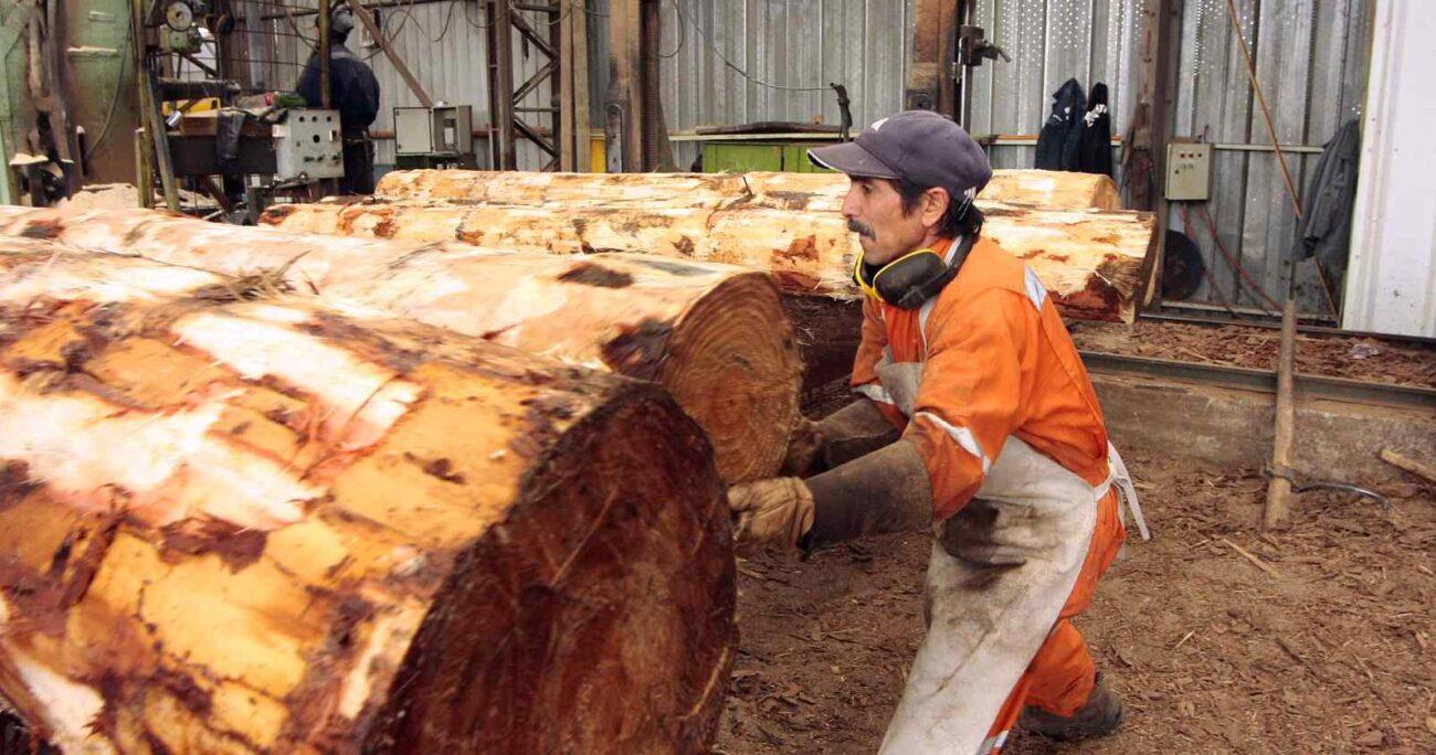 Durante mucho tiempo el trabajo de mujeres en el sector forestal no fue visibilizado y esto produjo un desincentivo para muchas. AGENCIA UNO/ARCHIVO.