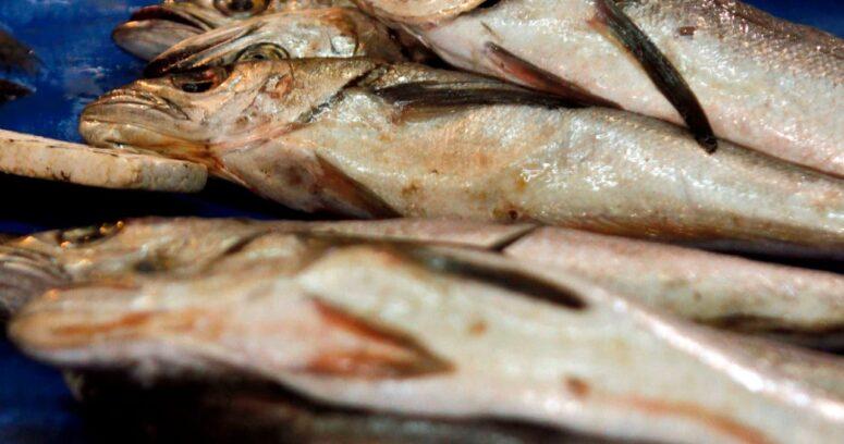 Trabajadores pesqueros solicitan a Contraloría fiscalizar la pesca ilegal de merluza