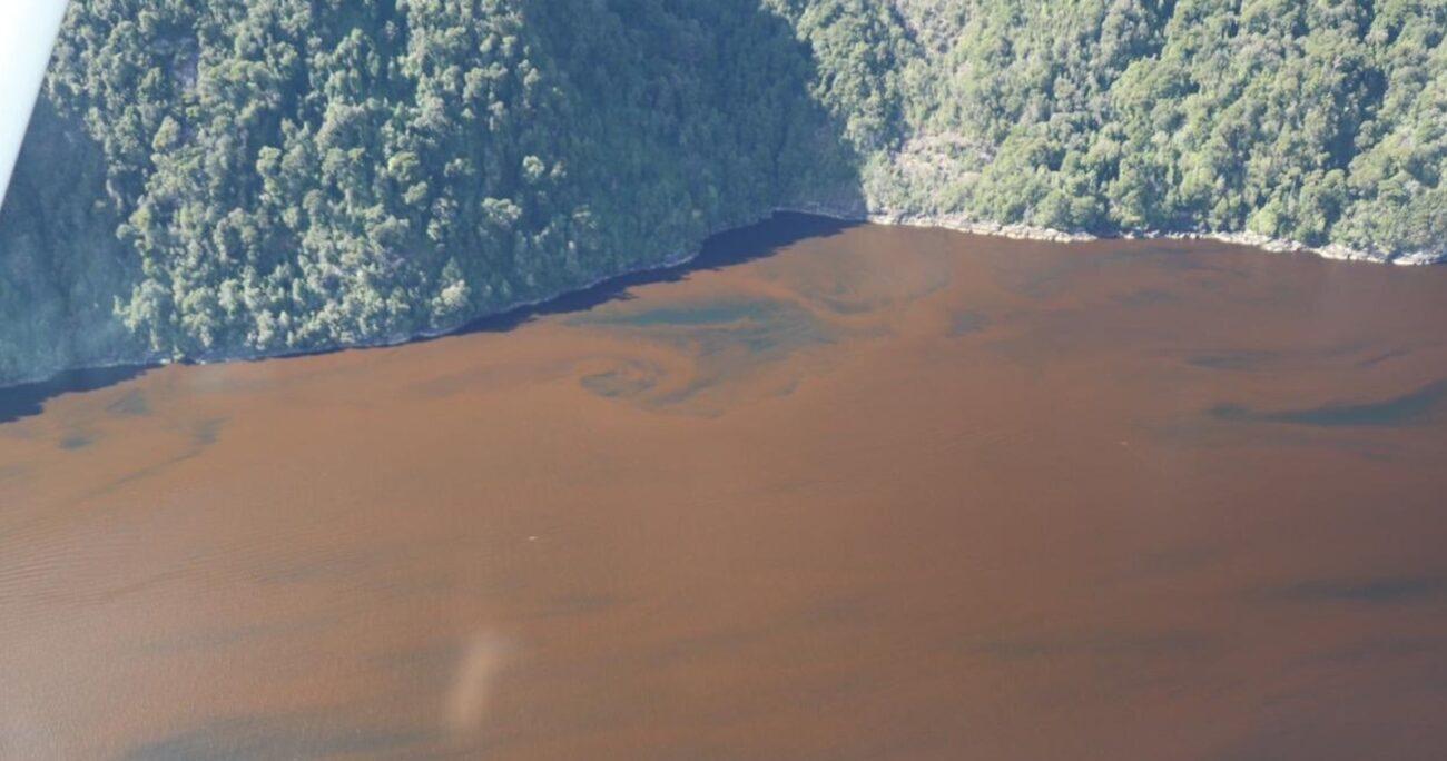 Casi tres toneladas de peces han muerto por el bloom de algas en Los Lagos y Aysén.