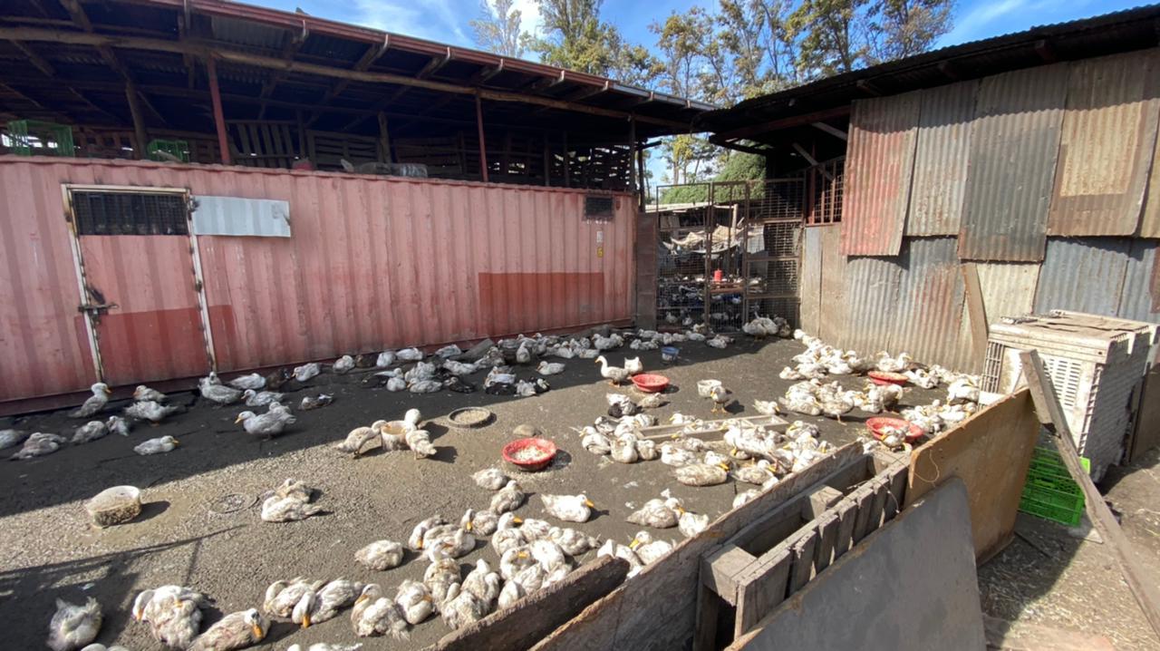 matadero en La Pintana