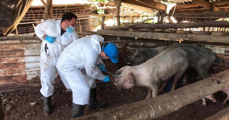 """""""Universidad de Chile gana fondo internacional para investigar virus de la influenza"""""""