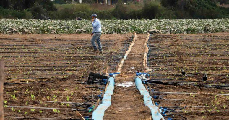"""""""Gobierno decretó emergencia agrícola en cuatro regiones por grave sequía"""""""
