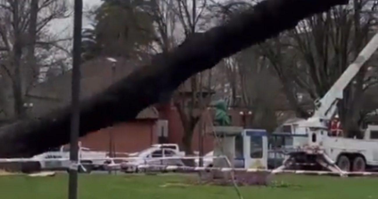 Talan árbol y destruyen por error busto de Simón Bolivar en Concepción