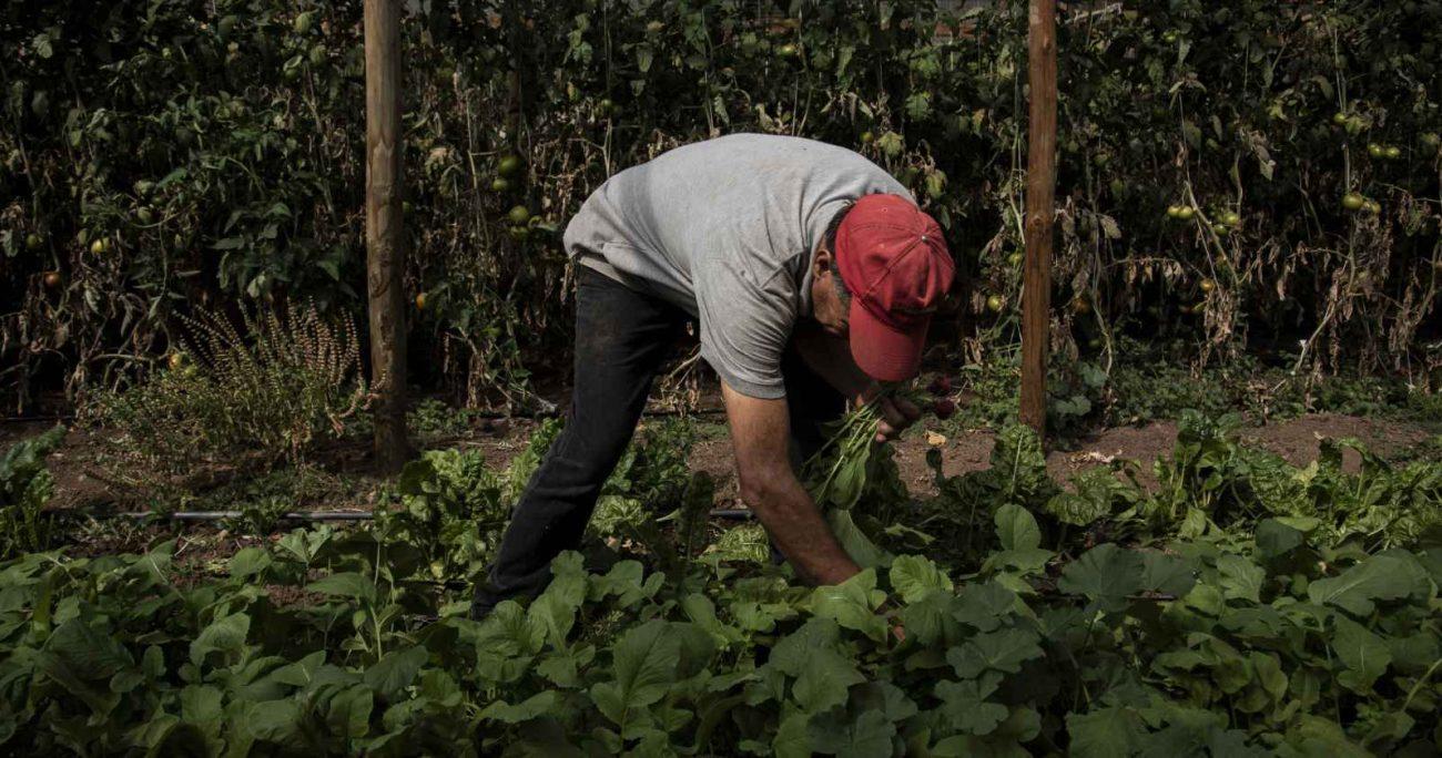 """La ministra de Agricultura precisó que el Gobierno está trabajando en un reglamento donde """"se contempla una visa temporal de trabajo que es muy importante para el sector"""". AGENCIA UNO/ARCHIVO"""